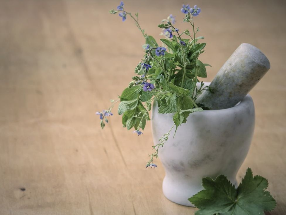 Healing herbs used in naturopathic medicine